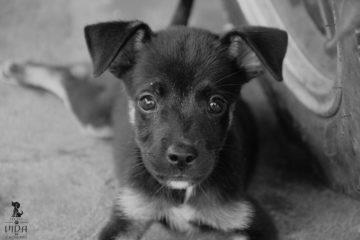 vida_de_cachorro
